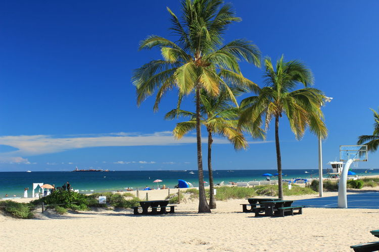 Palm trees on beach against clear blue sky