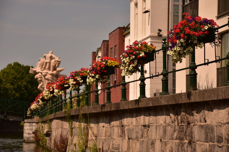 Flowers and water in beautiful Gent, Belgium Belgium Gent Architecture Bridge Building Building Exterior Built Structure City Clear Sky Connection Day Flower Flowering Plant Growth Low Angle View Nature No People Outdoors Plant Railing Sky Tree Water