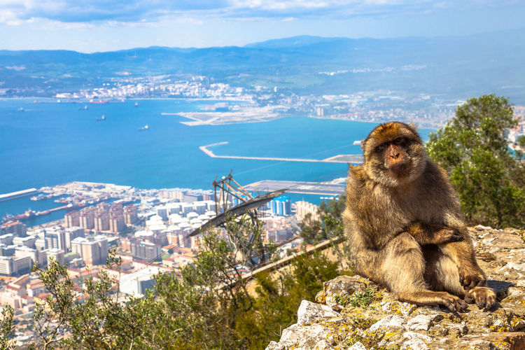 Close-up of monkey sitting on cliff by sea against sky during sunny day