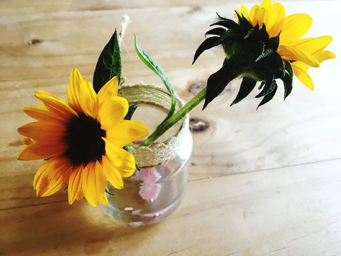 Freshness Flowering Plant Flower Plant Flower Head Inflorescence Table Fragility Petal Yellow Vulnerability  Beauty In Nature Nature Indoors  Close-up Glass Vase No People Glass - Material Sunflower