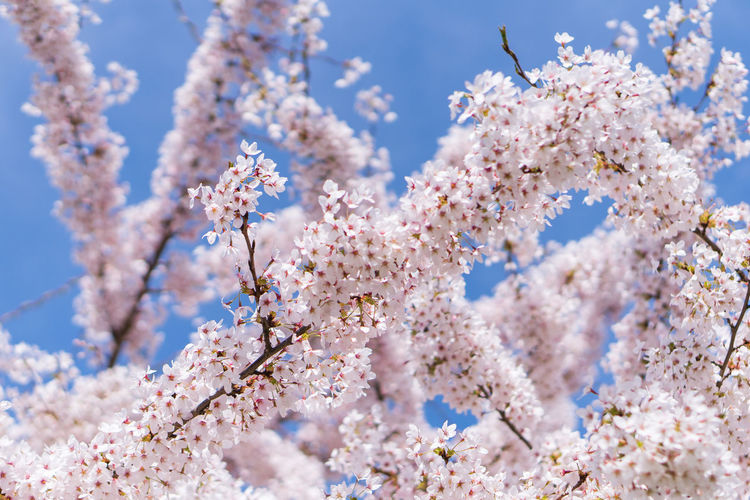 Low Angle View Of Blooming Tree Against Sky