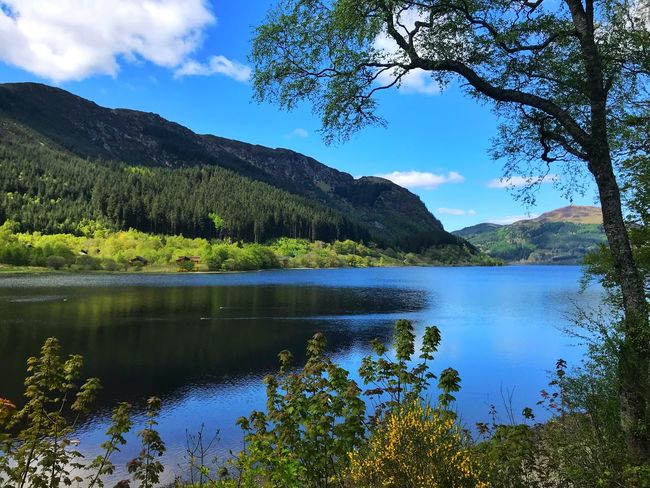 Loch Lubnaig Scotland Lochs Loch  Loch Lubnaig Water Tree Plant Beauty In Nature Lake Scenics - Nature Tranquility Sky Tranquil Scene Reflection Mountain Cloud - Sky Nature No People Growth Non-urban Scene Day Idyllic Green Color Outdoors