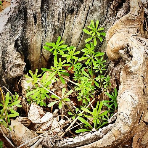 Lil ecosystem in a tree stump today! Amazing how nature works Great hike today with @buckscountybonsai Nature Wonder Earth Ecosystem  Natureswonders Naturesway Miniworld Dothefairieslivehere Magical Amazingnature Trees Treeworld Tinyforest Buckscountybonsai Pennsylvania Lakenockamixon Nockamixon Hike Hikingpennsylvania