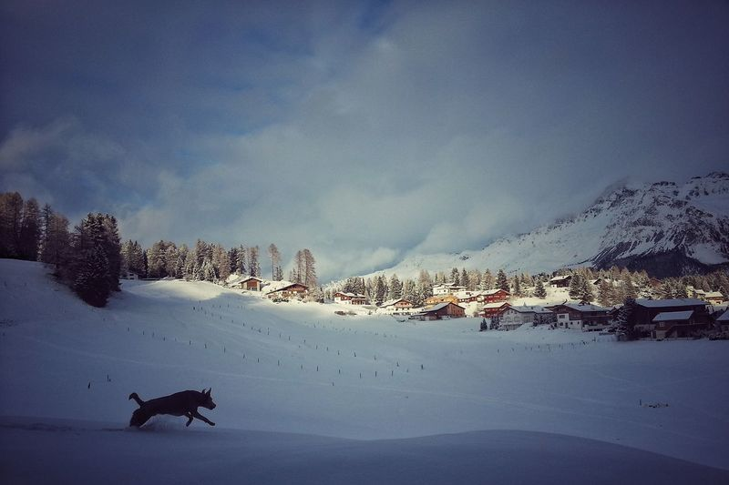 Dog running on snow covered field against cloudy sky