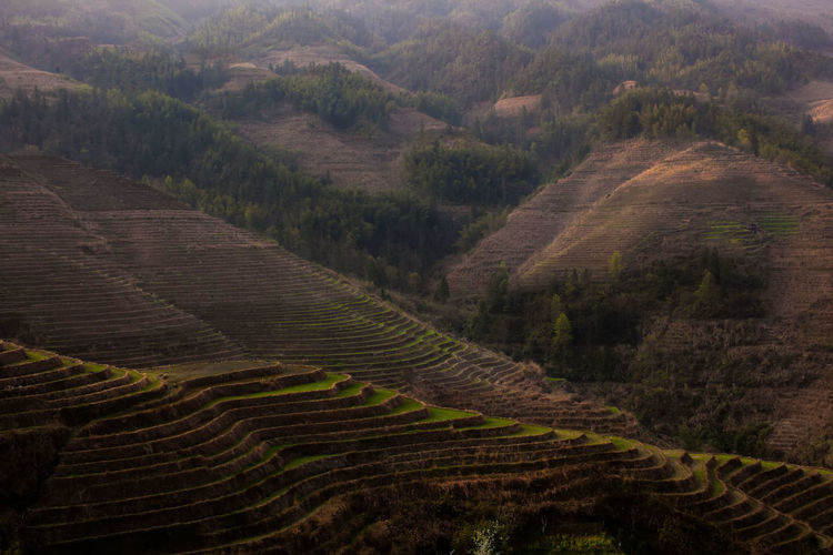 Longji Rice Terrace view. Agriculture Beauty In Nature China Crop  Day Farm Field Grass Green Color Growth Guilin High Angle View Landscape Longji Rice Terrace Mountain Nature No People Outdoors Rural Scene Scenics Tranquil Scene Tranquility Tree