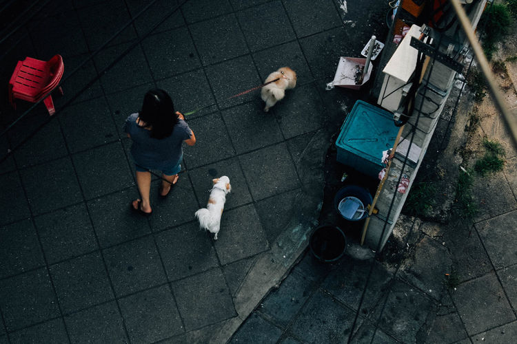 High Angle View Of Woman Walking Dogs