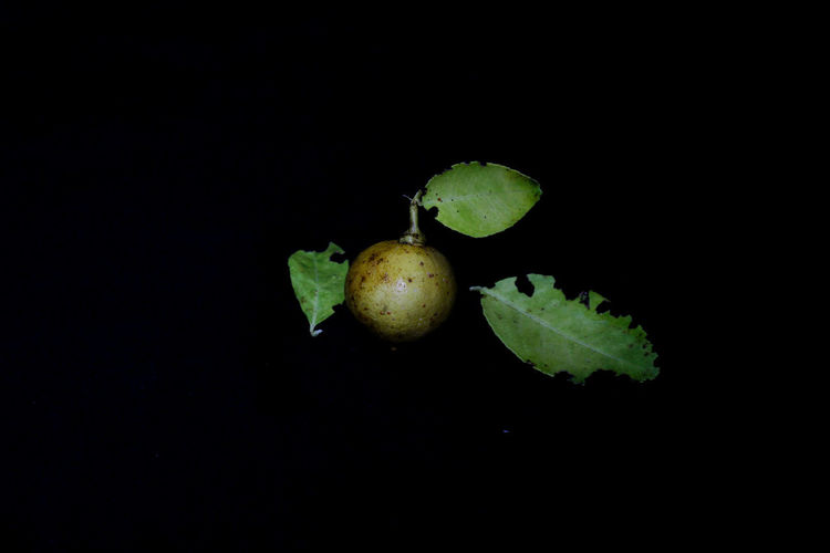 Close-up of apple against black background
