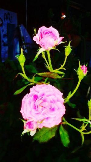 ดอกไม้ ยามค่ำคืน