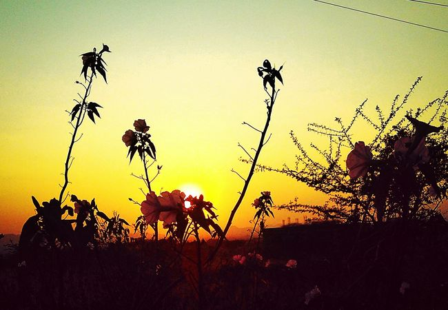 Nature EyeEm Best Edits Nature Photography EyeEm Best Shots EyeEm Nature Lover Trees Plants Best Clicks Flower Sun Sunset Sunset_collection
