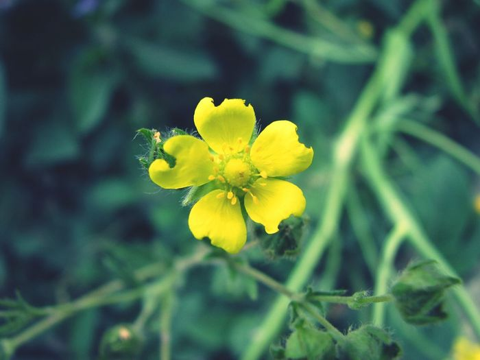 Nature Wild Flowers Yellow Flower
