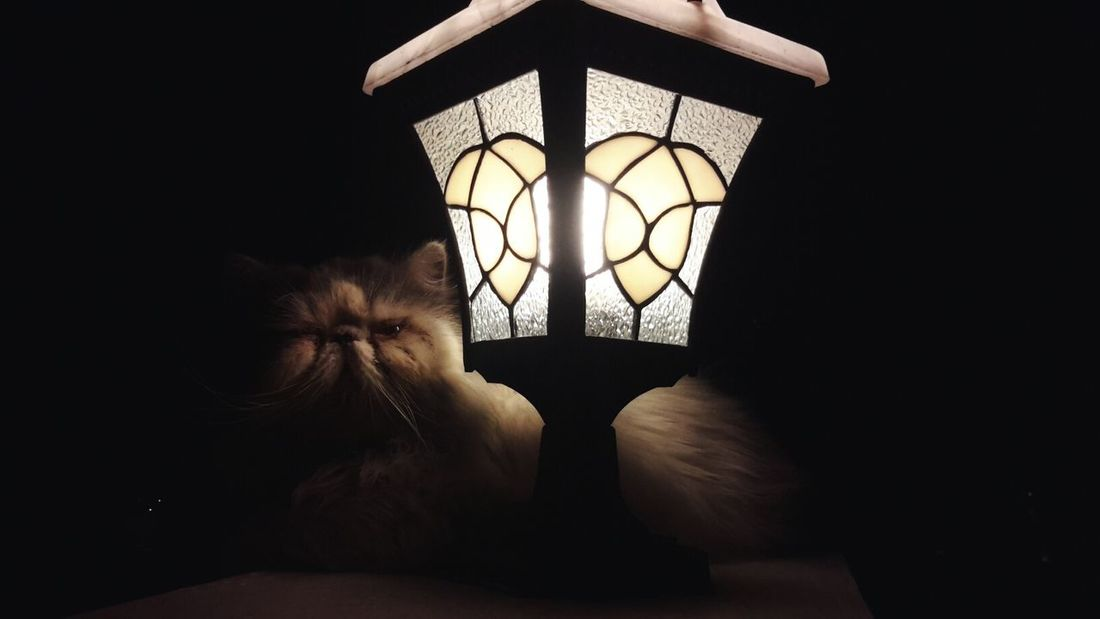 Into The Dark Persiancat Cat Shadow Light And Shadow meet Darius. KingDarius