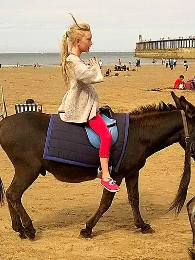Sand Side View One Animal Vacations Mammal Blond Hair Beach Sitting Donkeylove Meditation💓 Lol