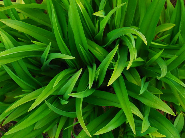 Green Color Growth Full Frame Backgrounds Close-up No People Freshness Plant Part Plant Leaf High Angle View Nature Day Food And Drink Beauty In Nature Vegetable Directly Above Indoors  Food Raw Food