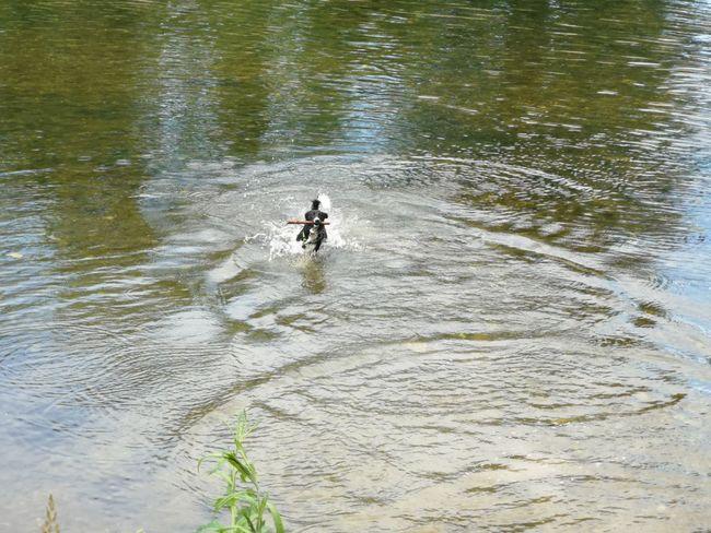Water Sport Adventure River Aquatic Sport Athlete