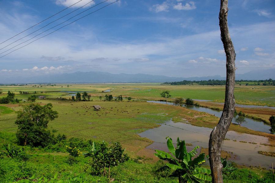 Landscape Farsightedness Burma Day Field Grass Grassland Green Green Color Landscape Myanmar Nature Sky Travel Tree Tropical Climate