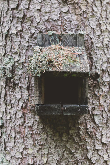 Close-up of birdhouse on tree trunk against brick wall