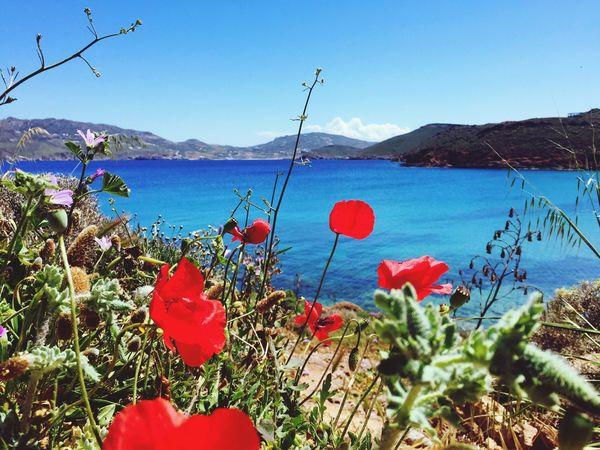 Showcase: December Flowers Garden Flowers,Plants & Garden Beach Beachphotography Colors Colorful Greece Landscape_Collection Landscape Landscape_photography Nature's Diversities