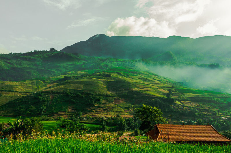 This was taken in Sapa, Vietnam really early in the morning. Agriculture Architecture Beauty In Nature Built Structure Cloud - Sky Day Farm Field Green Color Growth Landscape Mountain Mountain Range Nature No People Outdoors Rice - Cereal Plant Rice Paddy Rural Scene Scenics Sky Terraced Field Tranquil Scene Tranquility Tree