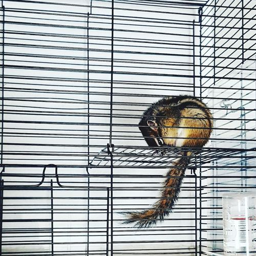 Low angle view of squirrel in cage
