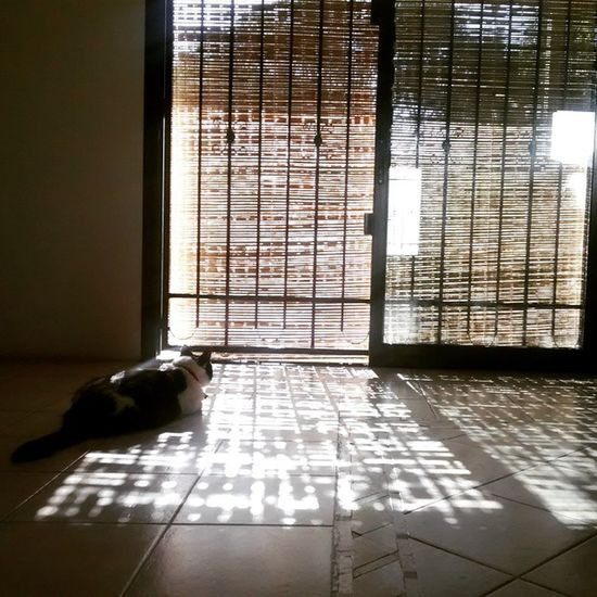 Ravel Cat Shadows Sombras Creative Light And Shadow