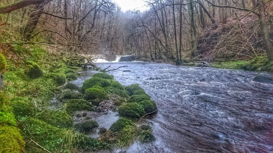 River Neath River Mossy New Years Eve 2015 Nature Waterfall Flowing Water Forest Winter Outdoors