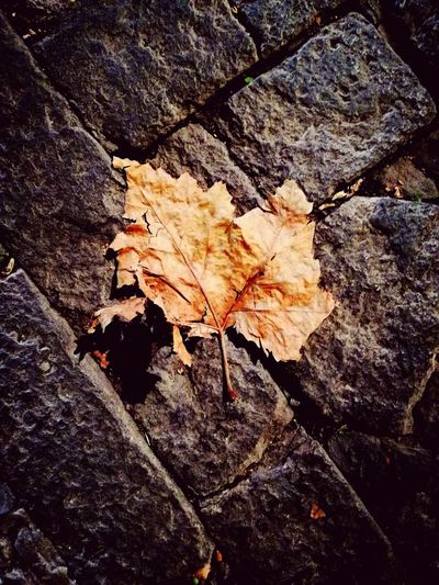 Otoño Hojas Secas Hoja Otoño Brown Street Autumn Leaves Autumn Leaf Outdoors No People Day Nature Close-up Fragility