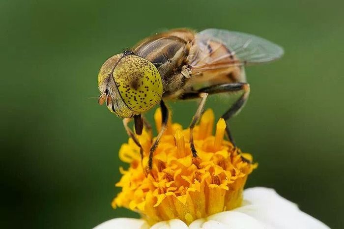 time for honey Eye4photography #makro Makro_collection Eye4photography  Nature_collection