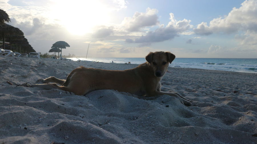 View of dog on beach against sky