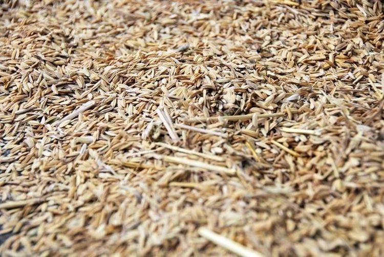 Grains and grains of rice... Detailsofmylife Taking Photos Taking Photos