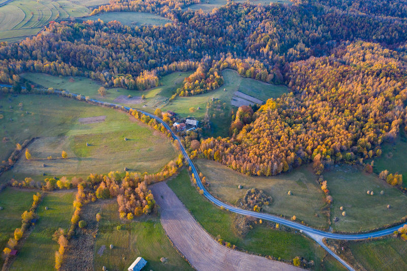 Aerial view of forest during autumn