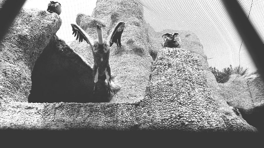 Barcelona Zoo. Black and White Photography. Barcelona, Spain Zoo Black And White Photography Vulture Animal Nature Photography Animal Wildlife Zoo Photography
