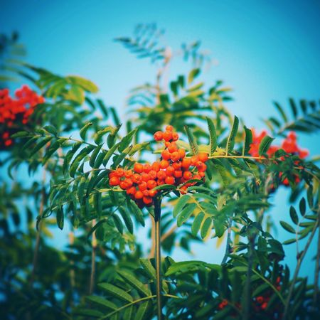 EyeEm Selects Plant Leaf No People Green Color Outdoors Day Nature Close-up Tree Beauty In Nature Flower UnderSea