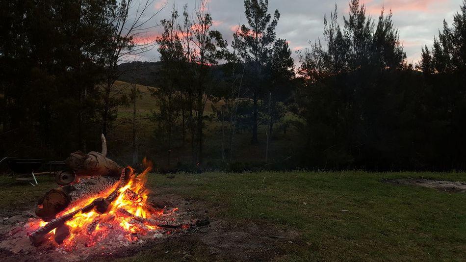 Burning Flame Heat - Temperature Tree Glowing Night No People Bonfire Outdoors Illuminated Nature EyeEmNewHere Sky