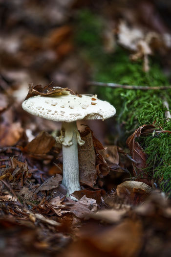 Out in the woods Autumn Green Macro Photography Nature Brown Close-up Focus On Foreground Focus Stacking Forest Freshness Growth Leaves Macro Moss Mushroom Nature No People Outdoors Selective Focus