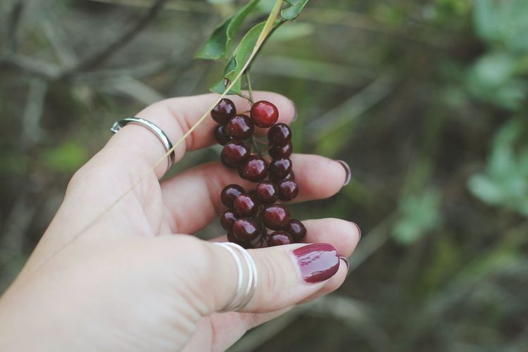 Cropped hand of woman holding red berries