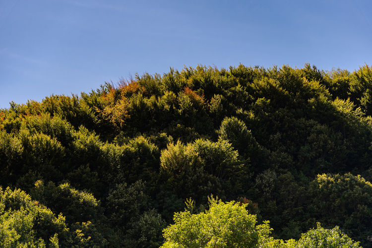 Trees growing in forest against sky
