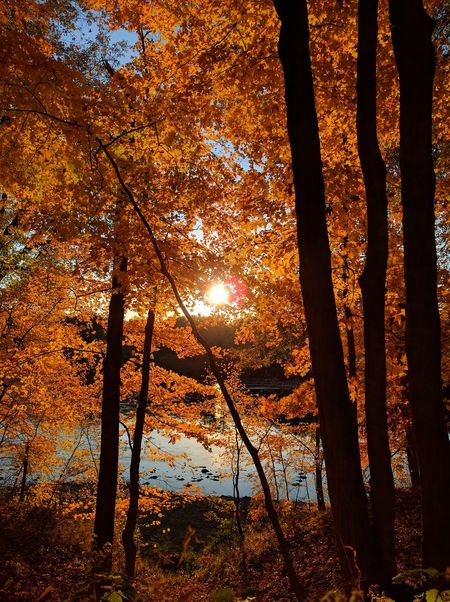 Autumn Beauty In Nature Branch Change Day Forest Growth Leaf Nature No People Outdoors Scenics Sky Sunlight Sunset Tranquil Scene Tranquility Tree Tree Trunk