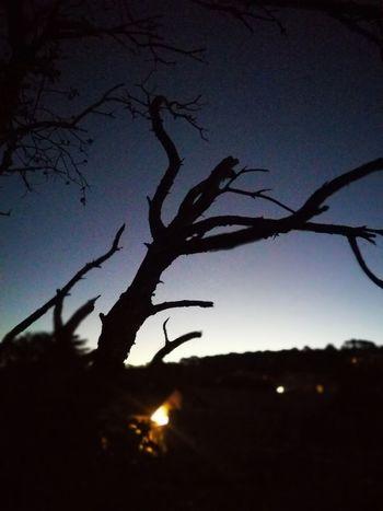 Night Nature Sky Tree