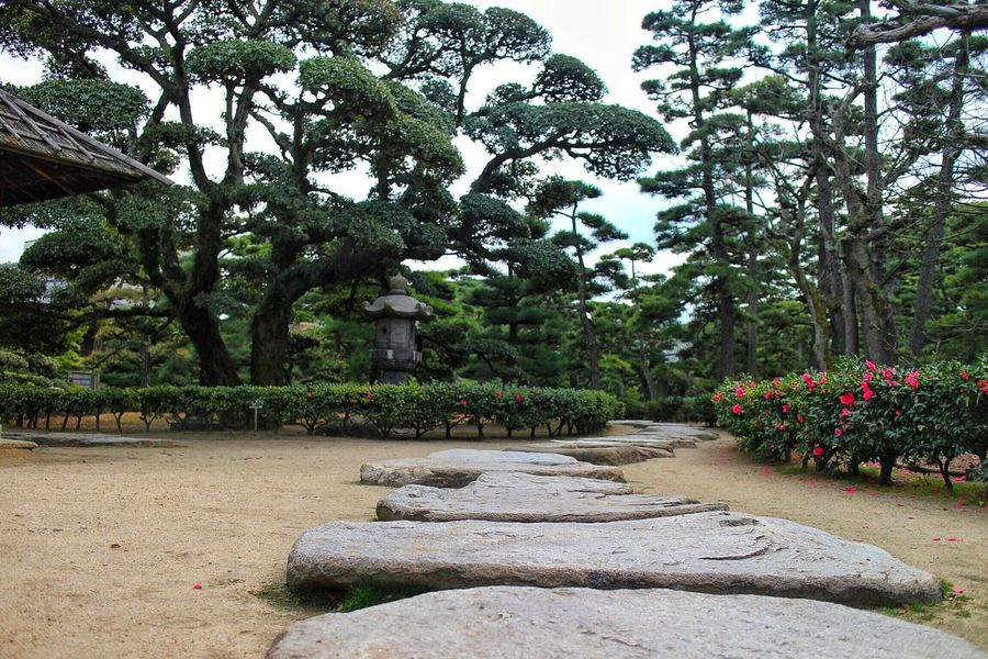 Garden Path Japanese Garden Plant Tree Flower Outdoors Footpath Stones Growth Tranquility