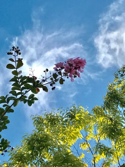 Growth Low Angle View Sky Tree Nature Beauty In Nature Flower No People Day Plant Cloud - Sky Leaf Outdoors Freshness Fragility Blooming Branch