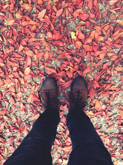 Autumn Autumn Colors Leafs Autumn Leafs