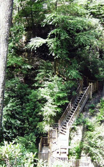 A million stairs to climb Tree Growth Green Color Nature Outdoors Branch Beauty In Nature Outdoor Photography Stairs_collection Stairs In Nature