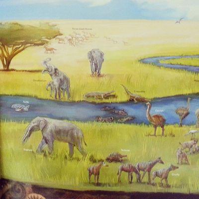 ابوظبي قبل 6 مليون سنة. المصدر: الاطلس البيئي ﻷبوظبي اصدار هيئة ابوظبي للبيئة