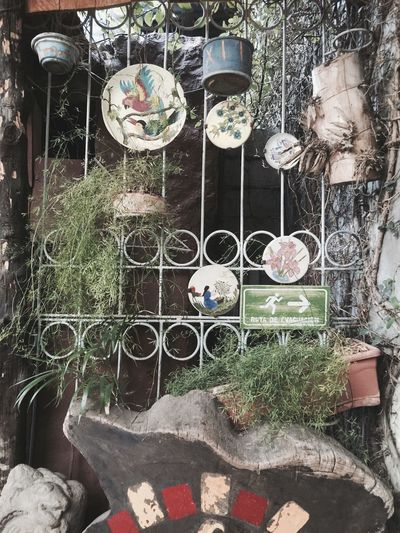 Everyday is a good day💚 Outdoors No People Hanging Nature Close-up Nature SantaAna Simmerdown ElSalvador  Vintage Long Goodbye EyeEmNewHere The Secret Spaces Resist