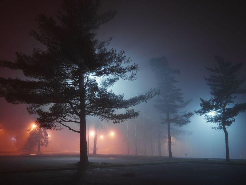 Tree Night Social Issues Nature Illuminated Igniting Outdoors Sky Sunset Fog No People Water Genk Belgium The Great Outdoors - 2017 EyeEm Awards The Street Photographer - 2017 EyeEm Awards