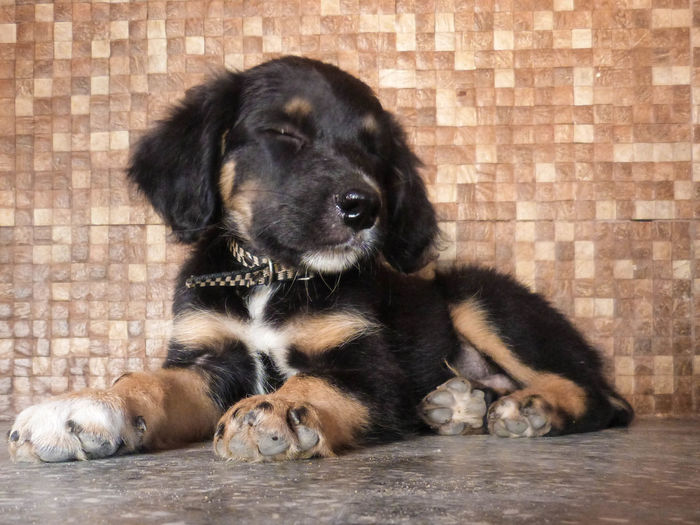Puppy sleeping against wall