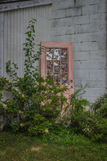 Discarded door Abandoned & Derelict Stain Glass Stain Glass Window Abandoned Building Exterior Built Structure Door Green Color Growth No People Outdoors Pink Door Plant Window Yellow Flowers