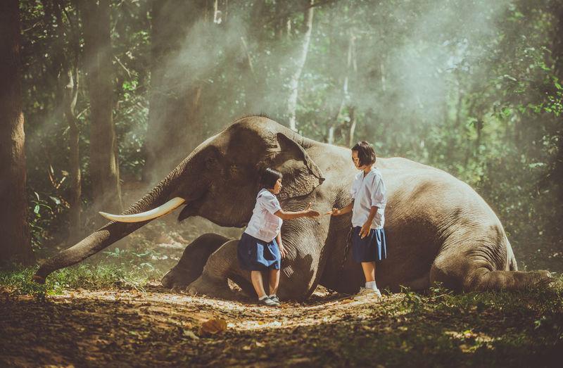 Schoolgirls giving handshake by elephant in forest