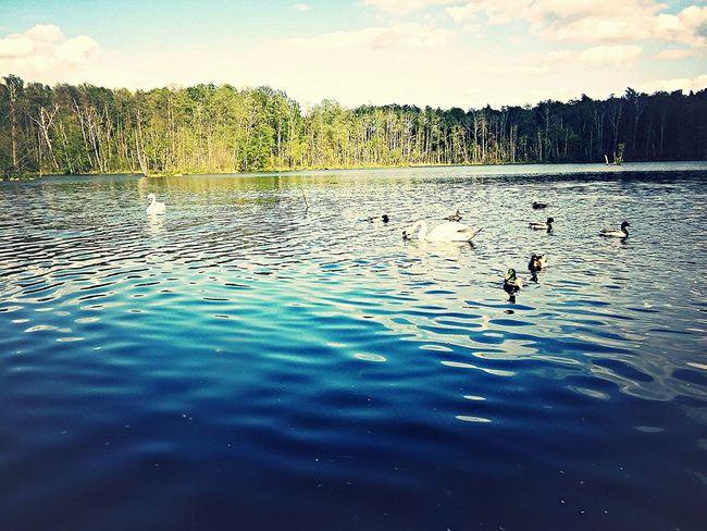Lake Landscape_Collection Wonderful Place Poland Beautiful ♥