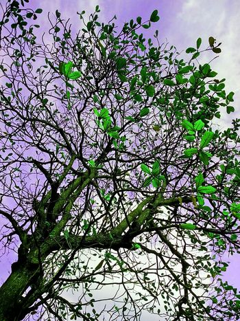 Tree Tree Photography Tree_collection  Tree Colors Colorful Tree Creative Color Creative Color On Leaves Nature Nature Photography Low Angle Shot Low Angle Tree View
